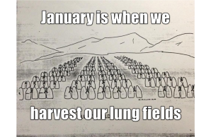 lung fields.jpg