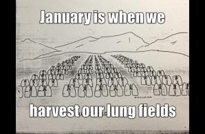 lung fields.jpg